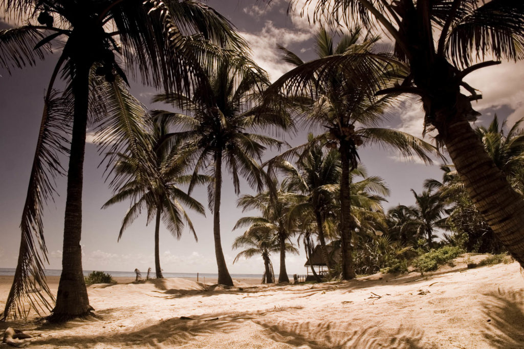 Mozambique Palm Tree Fringed Beach